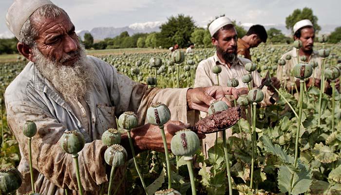 ΟΗΕ: Αύξηση στην παραγωγή οπίου στο Αφγανιστάν