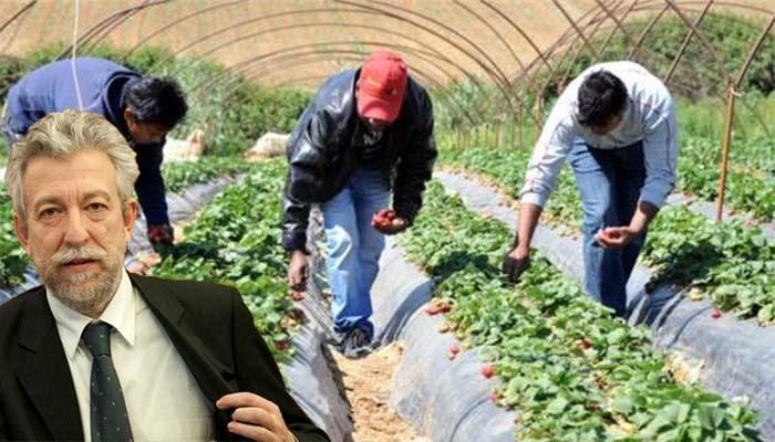 Έρευνα για την αθώωση στα φραουλοχώραφα της Μανωλάδας προανήγγειλε ο Κοντονής