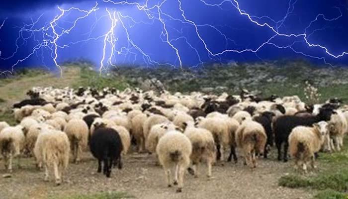 Κεραυνός ξεκλήρισε κοπάδι με 50 πρόβατα στην Αιτωλοακαρνανία