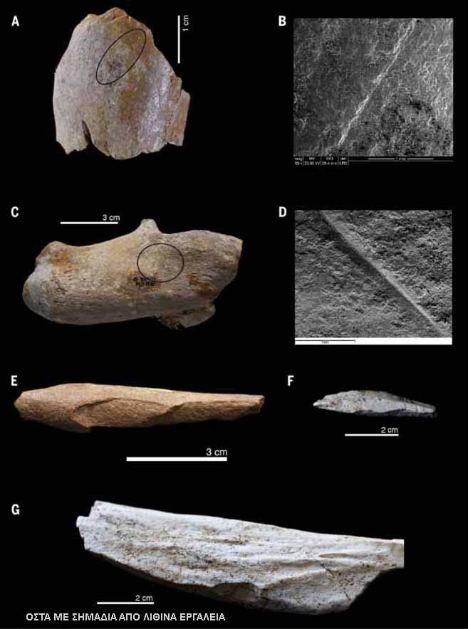 Μεγάλη ανακάλυψη: Λίθινα εργαλεία άνω των δύο εκατ. χρόνων στην Αλγερία