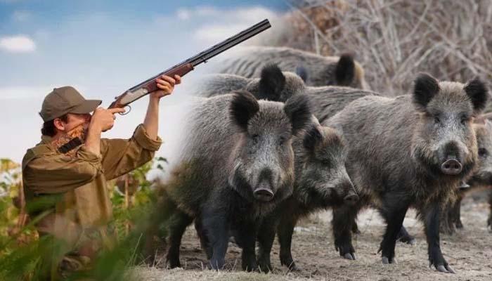 Ξεκινά η κυνηγετική περίοδος στην Ελλάδα - Αποφασίστηκε να κυνηγούν απεριόριστα τα αγριογούρουνα