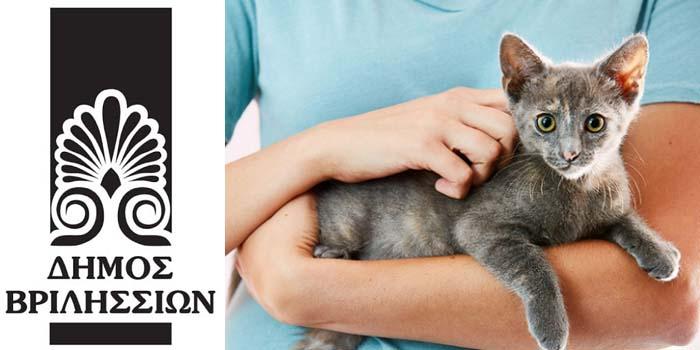 Δήμος Βριλησσίων: Συνεχίζονται οι υιοθεσίες γάτων μέσω του προγράμματος Διαχείρισης Αδέσποτων Ζώων